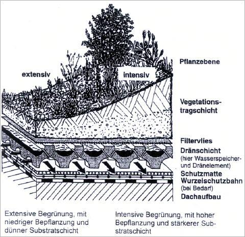 Extensive begrünung flachdach aufbau